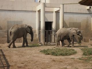 201309_zoo13.JPG