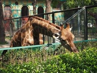 201309_zoo18.JPG