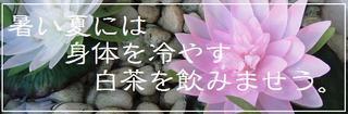 201108_baicha_top.jpg