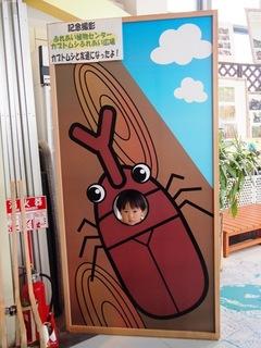 20140729_kabutomushi007.JPG