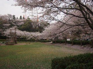 201504_sakura8.JPG